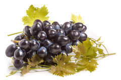 Bunch of blue grapes with leaf isolated on white background Stock Images