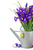 Bunch of blue irise flowers in watering can Stock Photos