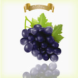Bunch of blue, purple, black Isabella grapes with vine leaves isolated on white background. Realistic, fresh, natural. Food, dessert. 3d vector illustration for Stock Photos