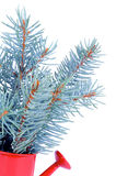 Bunch of Blue Spruce Branch Royalty Free Stock Photography