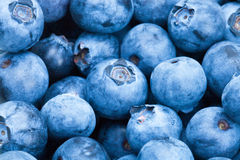 Bunch of blueberries - close up shot Royalty Free Stock Photography