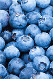 Bunch of blueberries - close up studio shot Stock Photo