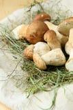 Bunch of boletus mushroom in the hay Stock Photo