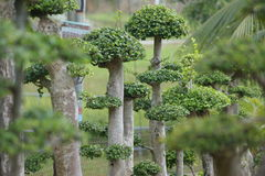Bunch of Bonsai Royalty Free Stock Images