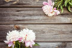 Bunch, bouquet of pink peonies on a wooden background. Frame of flowers Stock Images
