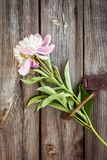 Bunch, bouquet of pink peonies on a wooden background. Frame of flowers Stock Photos
