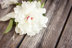 Bunch, bouquet of white peonies on a wooden background. Frame of flowers Royalty Free Stock Image