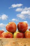 Bunch of braeburn apples in a wooden crate Royalty Free Stock Image