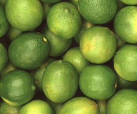 A bunch of bright green limes Royalty Free Stock Images