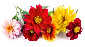 Bunch bright red and yellow flowers with Royalty Free Stock Photos