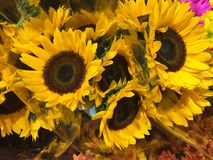 Bunch of bright Sunflowers sold at Market royalty free stock image