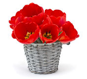 Bunch of bright tulips in bucket royalty free stock image