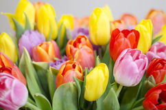 Bunch of bright tulips. Spring and easter flowers Stock Photography