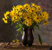Bunch of bright yellow flowers (rudbeckia) in brown vase and walnuts royalty free stock images