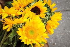 Bright Yellow Sunflowers Royalty Free Stock Images
