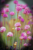 A Bunch of Brightly Coloured Chives with a vignette border Stock Image