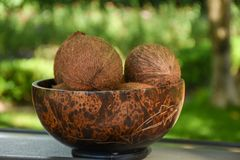 Bunch of brown coconuts in the wooden plate on the table. Bunch of  brown coconuts in the wooden plate on the table at the tropical bar Royalty Free Stock Photography