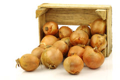 Bunch of brown onions coming from a wooden box Stock Photos