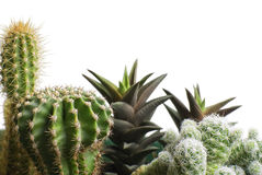Bunch of cactus Stock Photo