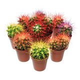 Bunch of cactuses Royalty Free Stock Photos
