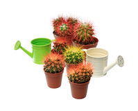 Bunch of cactuses and watering cans Royalty Free Stock Images