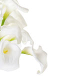 Bunch of Cala Lilies Royalty Free Stock Image