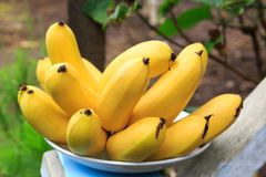 Bunch of Cambodia Ripe Banana on a Plate stock photography
