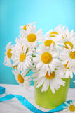 Bunch of camomile flowers Stock Photos