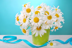 Bunch of camomile flowers Stock Image
