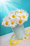 Bunch of camomile flowers Stock Images