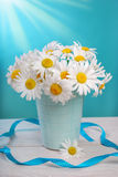 Bunch of camomile flowers Stock Photography