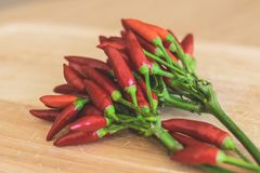 Bunch, Capsicum, Cayenne Stock Image