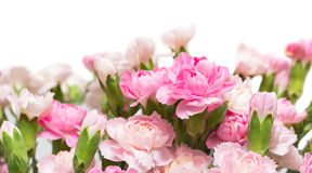 Bunch of carnation Royalty Free Stock Images