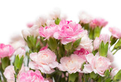Bunch of carnation Stock Photo
