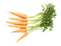 Bunch of carrot with the green top isolated over white background Royalty Free Stock Image
