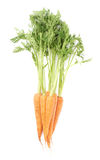 Bunch of carrot with the green top isolated over white background Stock Photos