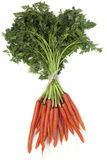 Bunch of Carrots Stock Photo