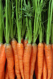 Bunch of carrots. Photo of a bunch of carrots as a background royalty free stock images