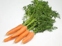 Bunch of carrots. Freshly harvested carrots on a white background Stock Photos