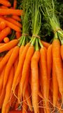 bunch of carrots stock photography