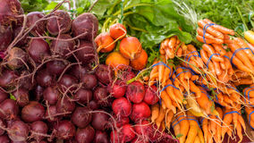Bunch of carrots with bunches of beets. Stock Photo