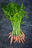 Bunch of carrots fresh from garden. Bunch of orange carrots fresh from garden with dirt on gray stone background Stock Photo