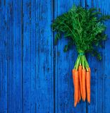 A bunch of carrots. Fresh raw Carrots with stems. Garden Carrots. On colorful blue wooden background Stock Image