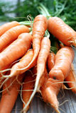 Bunch of Carrots Royalty Free Stock Images