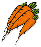 Carrots illustration. Bunch of carrots illustration; Bundle of carrots roots cartoon style illustration Stock Images