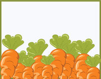 A bunch of carrots Stock Photos