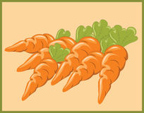 A Bunch of Carrots Stock Image