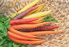 Bunch of carrots, tricolor, on a wicker basket.  Stock Photography