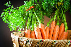 Bunch carrots  in wooden basket Stock Image