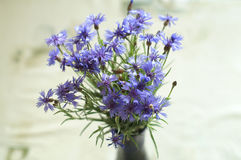 Bunch of centaurea flowers. Bunch of many blue centaurea flowers Royalty Free Stock Photo
